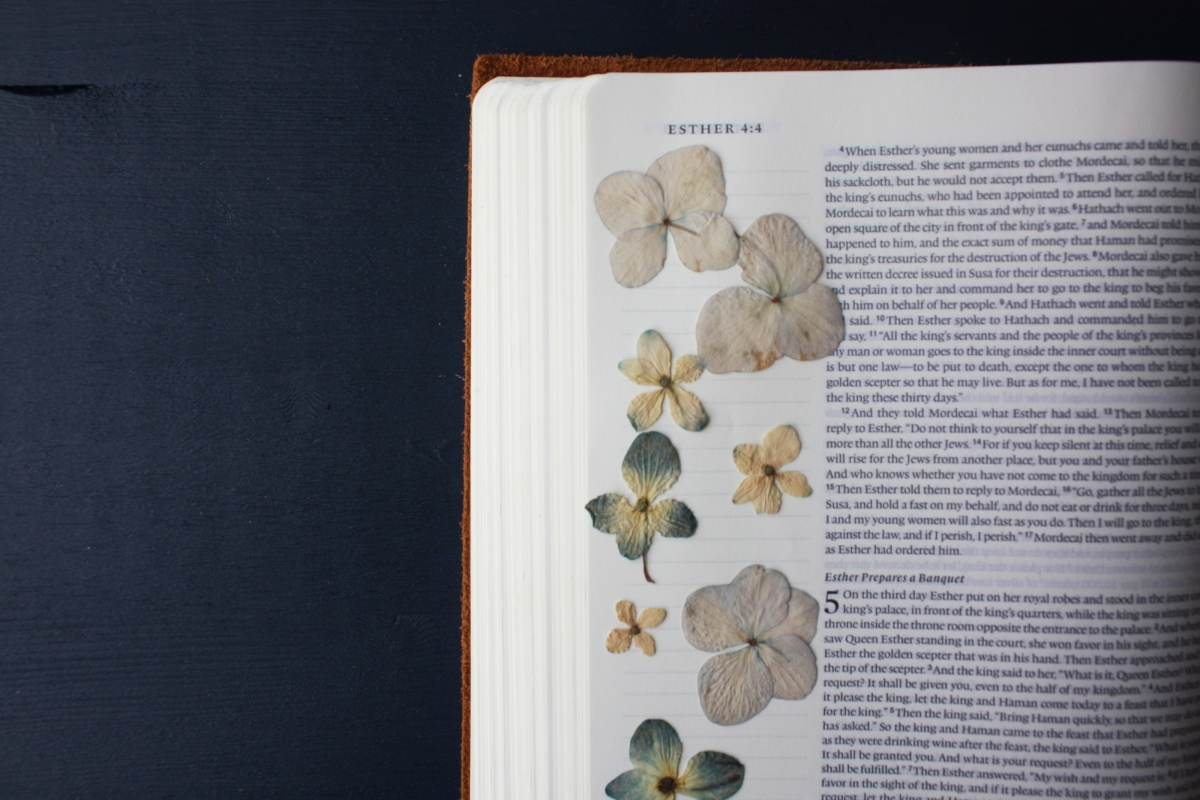 an open Bible with dried flowers