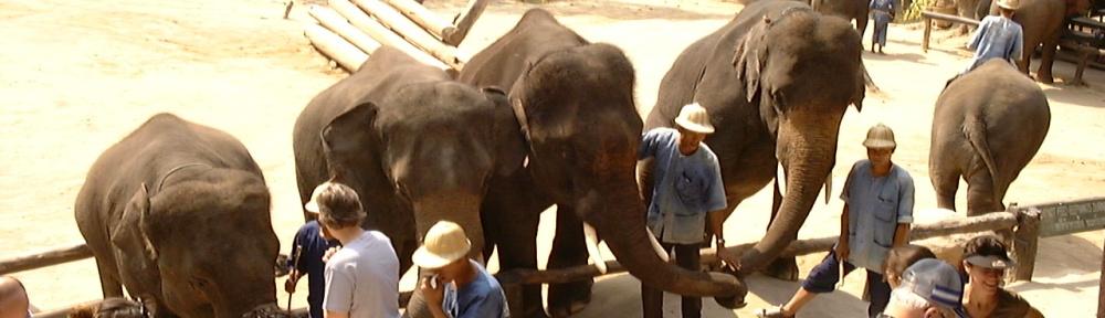 elephants entertaining people