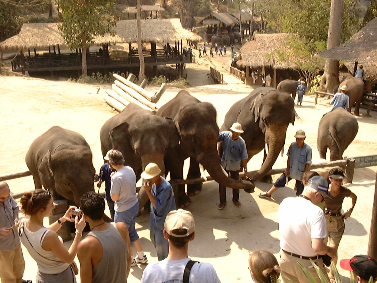 elephants entertaining people