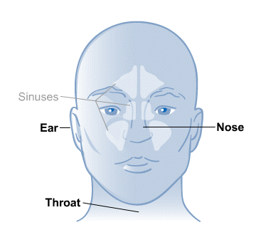 diagram of the nose and sinuses