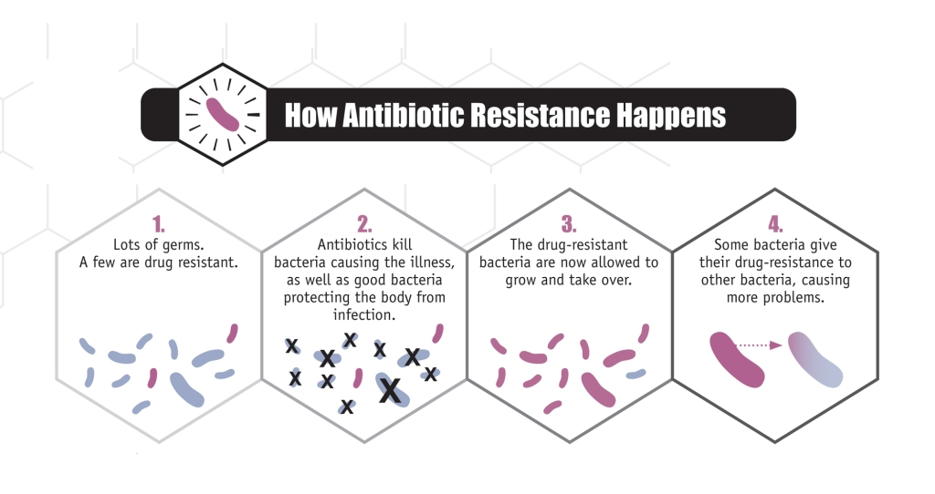 How antibiotic resistance develops