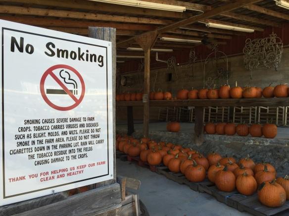 No Smoking sign with pumpkins