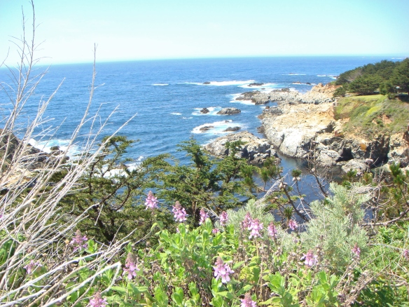 flowers along the Pacific Ocean shore