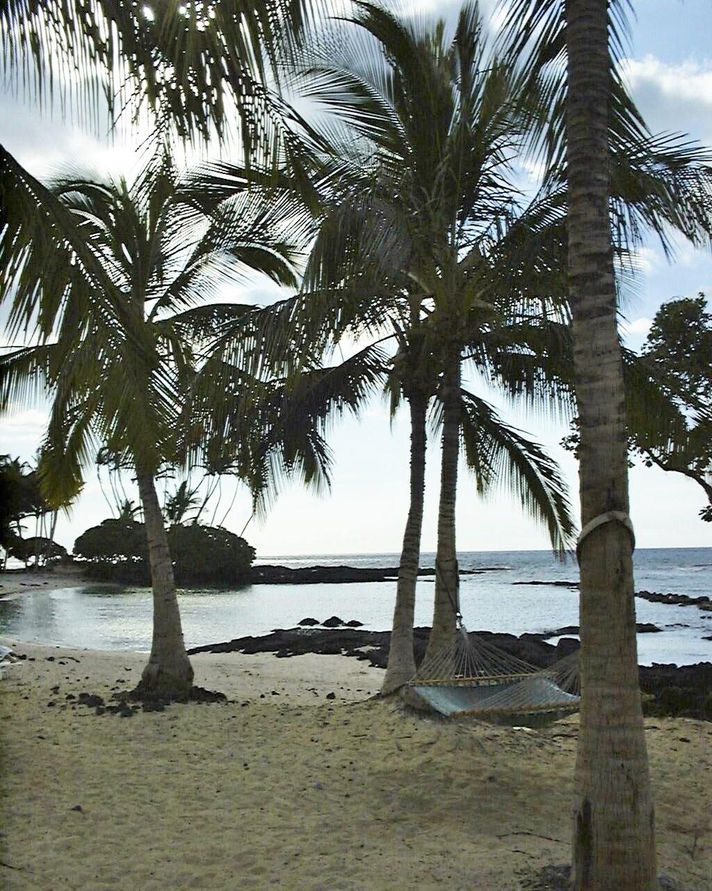 beach, palm trees, hammock