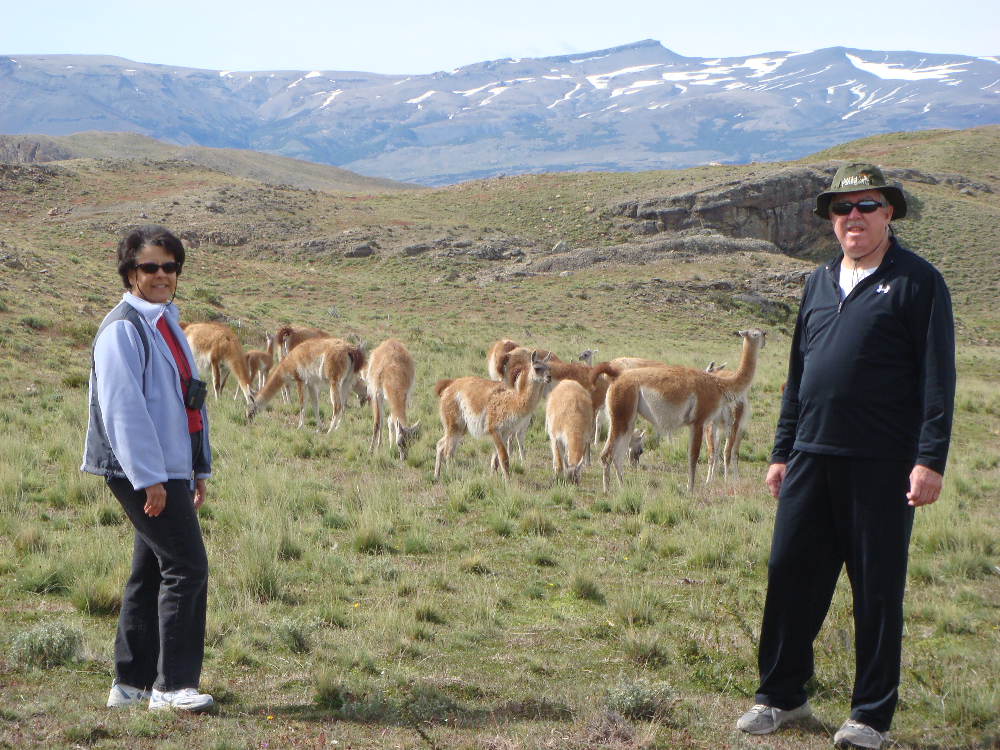 couple with llamas