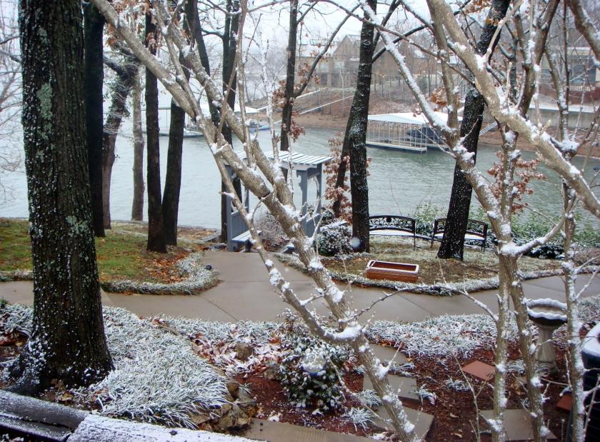 light snow on trees and ground