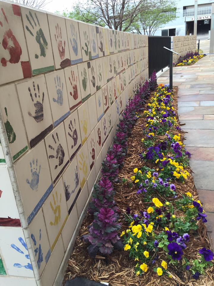 bright colored flowers along a wall