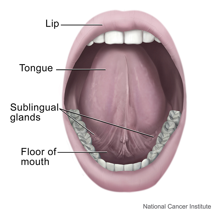 diagram of the mouth from the National Cancer Institute