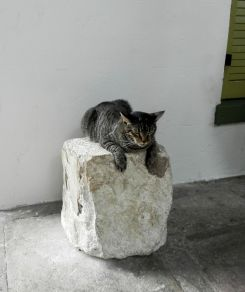 a dozing cat sitting on a big rock