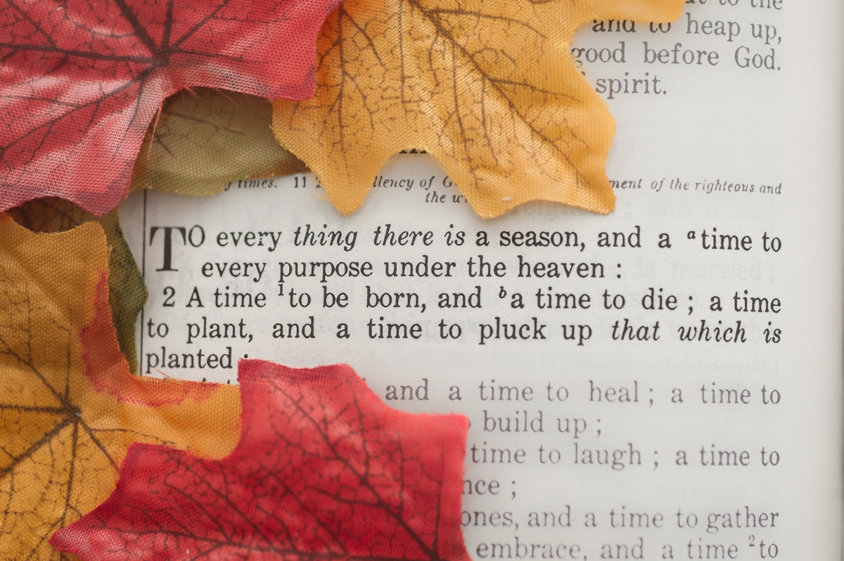 """To every thing there is a season"" Bible verse with fall color leaves"