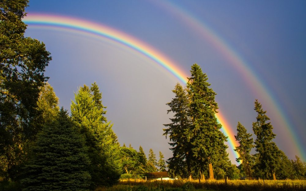 a beautiful rainbow across the sky in a forest