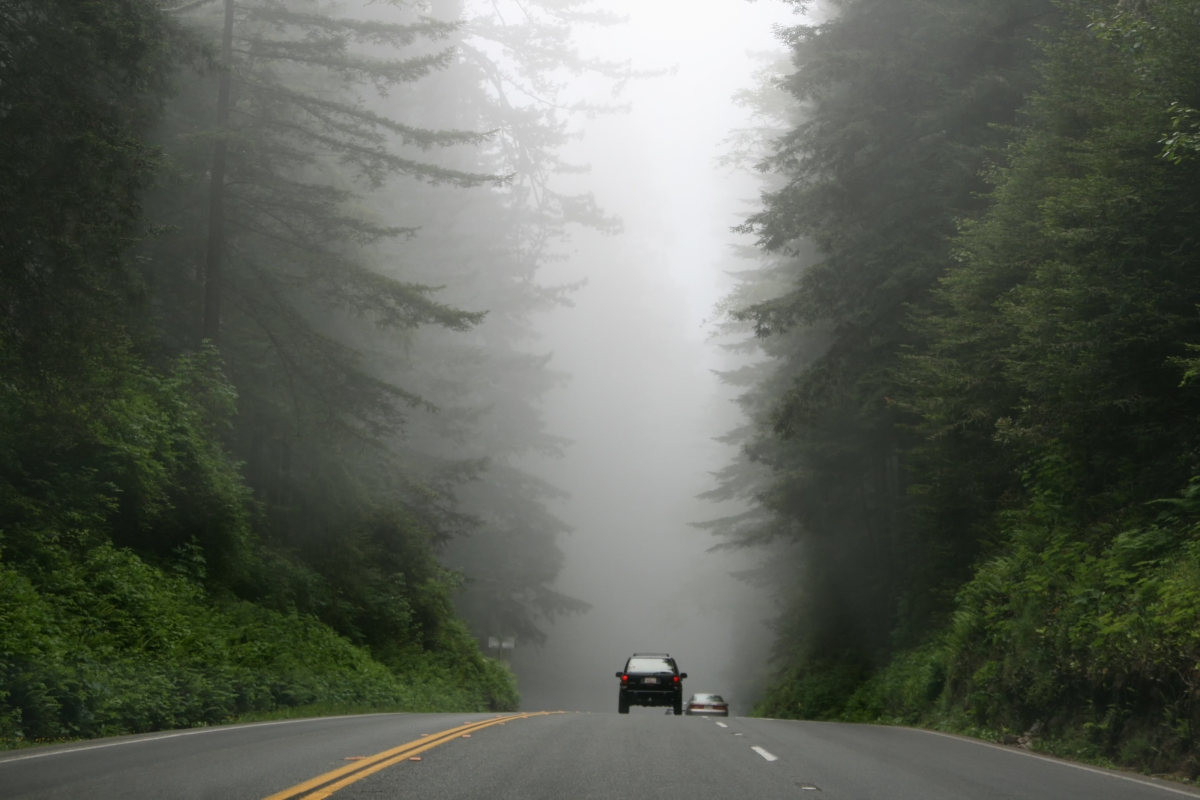 two cars driving away on a foggy road