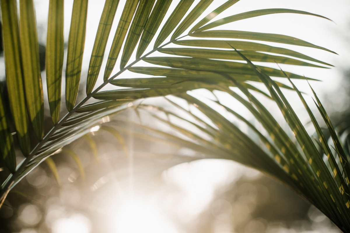 Why we need Palm Sunday