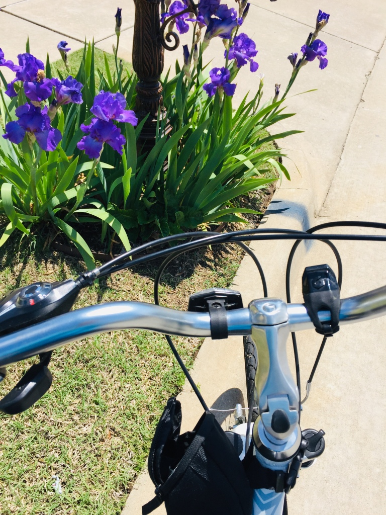 handlebars of a bicycle, and iris flowers