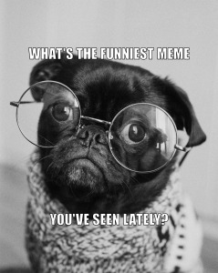 "a smal dog with round glasses on ""What's the funniest meme you've seen lately?"":"