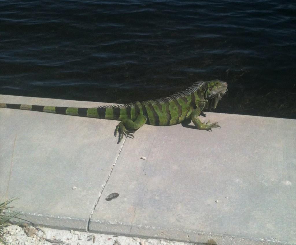 a green iguana sitting on a ledge