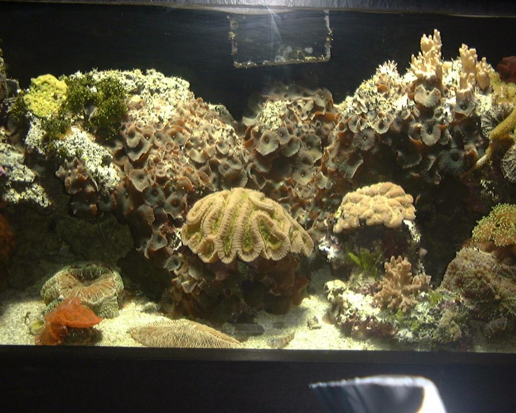 marine animals in an acquarium